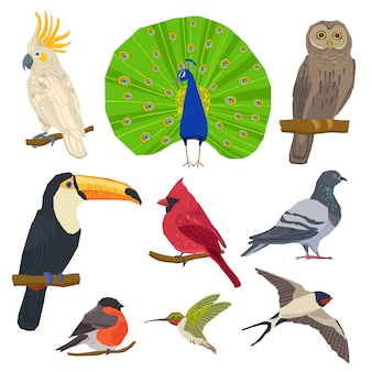 Conjunto de iconos dibujados de aves