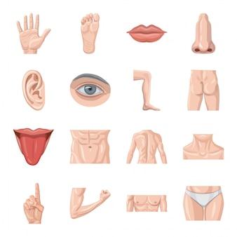 Conjunto de iconos de dibujos animados de cuerpo humano.