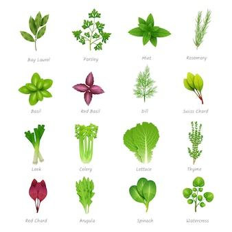 Conjunto de iconos de diferentes hierbas especiales
