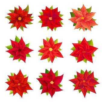 Conjunto de iconos de flor de pascua, estilo de dibujos animados