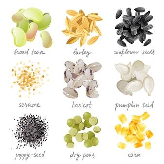 Conjunto de iconos de granos, semillas y frijoles
