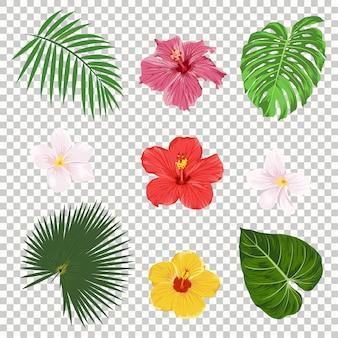 Conjunto de iconos de hojas y flores tropicales aislado sobre fondo de cuadrícula de transparencia. palma, hoja de plátano, hibisco y plumeria flores. plantillas de diseño de árboles de la selva. colección botánica y floral