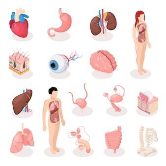 Conjunto de iconos isométricos de órganos humanos de sistemas reproductivos masculinos y femeninos esqueleto pulmones cerebro hígado útero aislado