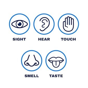 Conjunto de iconos de línea de cinco sentidos humanos.