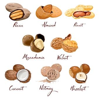 Conjunto de iconos de nueces y semillas