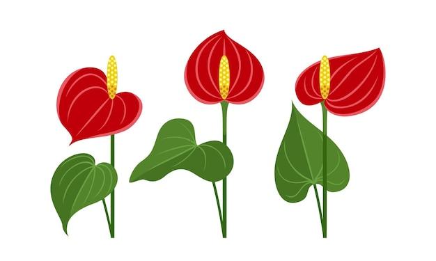 Conjunto de iconos planos de flores rojas de anthurium.
