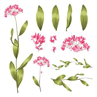 Conjunto de iconos de plantas y hierbas. elementos para diseño o tarjeta de invitación.