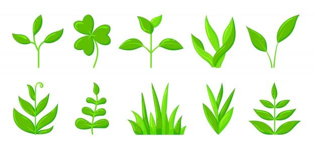 Conjunto de iconos de primavera verde hierba brote planta plana de dibujos animados, retoño de plántula orgánica creciendo.