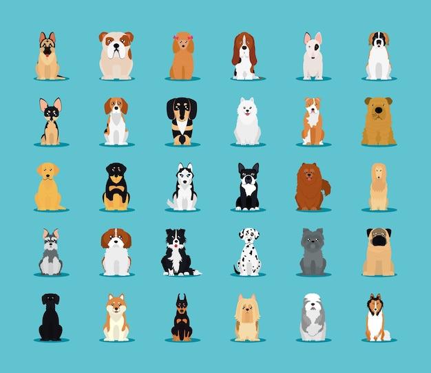 Conjunto de iconos de razas de perros sobre fondo azul, estilo plano