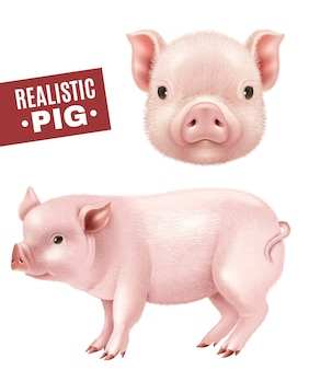 Conjunto de iconos realistas de cerdo