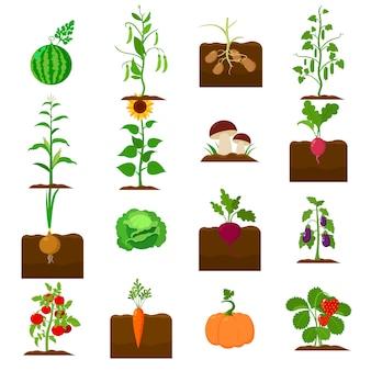 Conjunto de iconos de vector de dibujos animados de planta. ilustración de vector de vegetales vegetales.