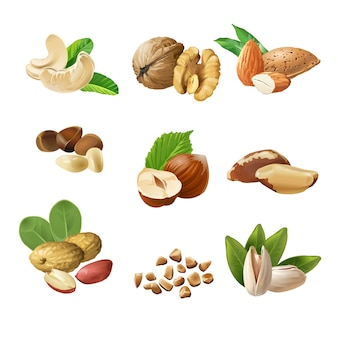 Conjunto de iconos vectoriales de frutos secos