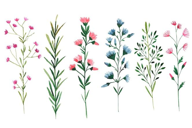 Conjunto de ilustración acuarela de flores silvestres sobre fondo blanco