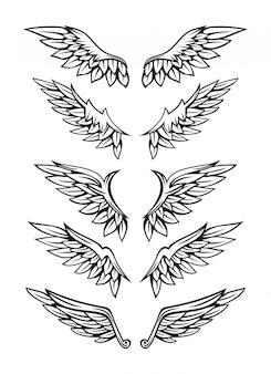 Conjunto de ilustración de ala