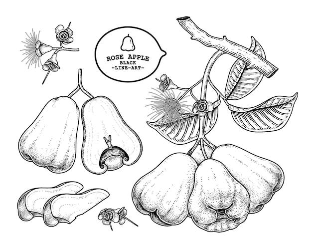 Conjunto de ilustración botánica de elementos dibujados a mano de fruta de manzana rosa