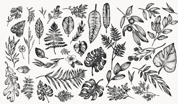 Conjunto de ilustración botánica vintage de plantas y flores