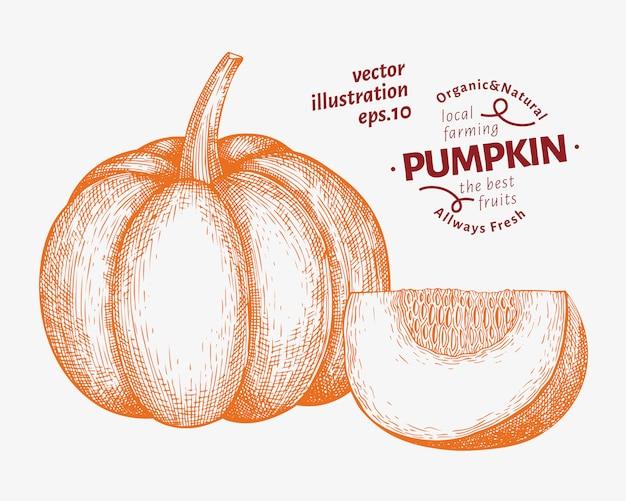 Conjunto de ilustración de calabaza. dibujado a mano ilustración vectorial vegetal. estilo grabado halloween o día de acción de gracias