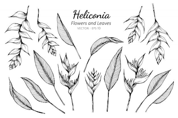 Conjunto de ilustración de dibujo de flor y hojas de heliconia.
