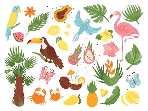 Conjunto de ilustración de elementos exóticos tropicales de dibujos animados, colección con aves de la selva, hojas y flores de palmeras, fruta de coco