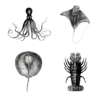 Conjunto de ilustración de especies de vida marina