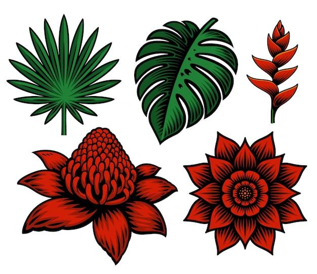 Conjunto de ilustración de flores y plantas tropicales