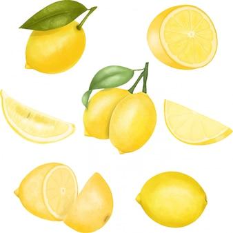 Conjunto de ilustración de limones aislados dibujados a mano