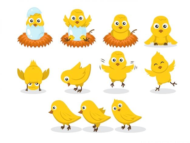 Conjunto de ilustración de personaje de pollo bebé pollitos