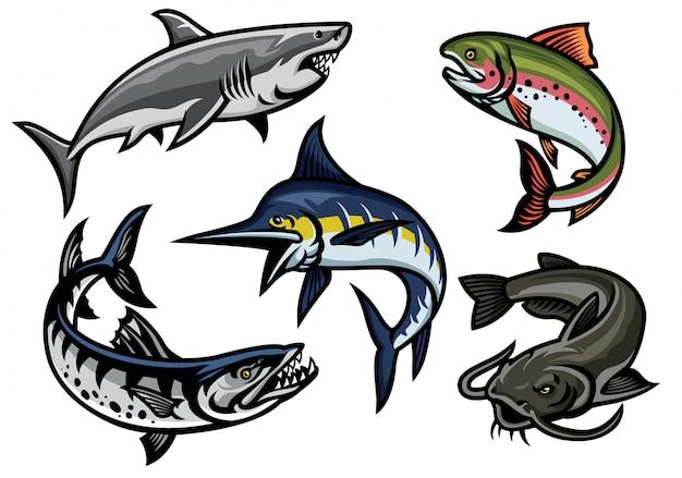 Conjunto de ilustración de pescado en color