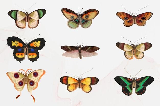 Conjunto de ilustración de polillas y mariposas