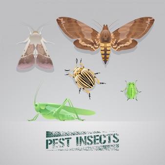 Conjunto de ilustración realista de insectos plagas