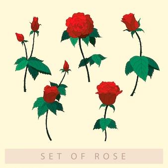 Conjunto de ilustración de rosas rojas