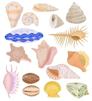 Conjunto de ilustración submarina de conchas marinas y conchas de berberechos oceánicos de mariscos y almejas o conchas aisladas sobre fondo blanco