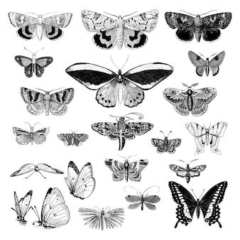 Conjunto de ilustración de varios insectos