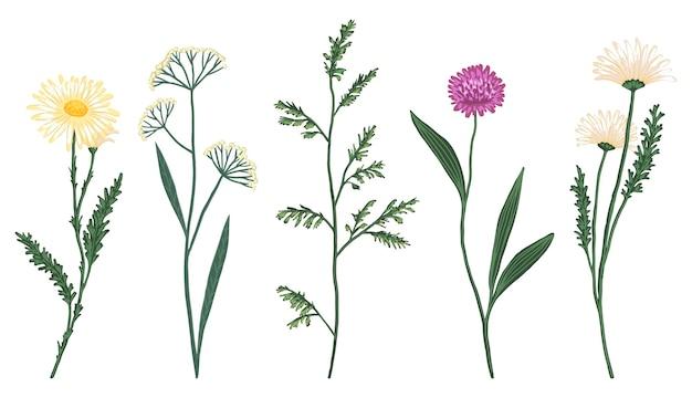 Conjunto de ilustración de vector dibujado a mano de flores silvestres. bocetos botánicos abstractos. elementos florales vintage de colores aislados sobre fondo blanco.