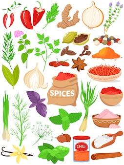 Conjunto de ilustración de vector de hierbas de especias.