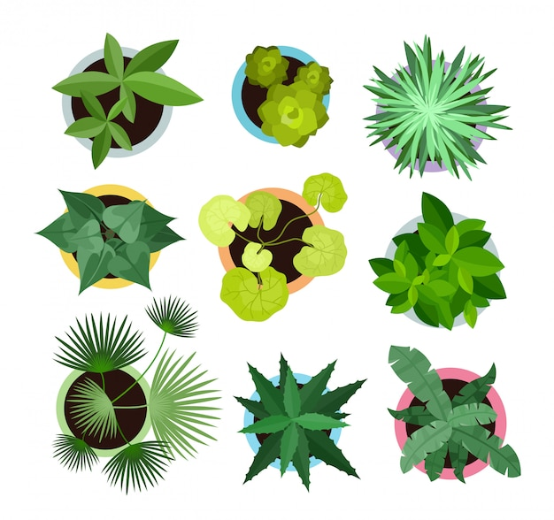 Conjunto de ilustración vectorial de diferentes plantas de interior en macetas vista superior colección de plantas, cactus en estilo de dibujos animados plana.