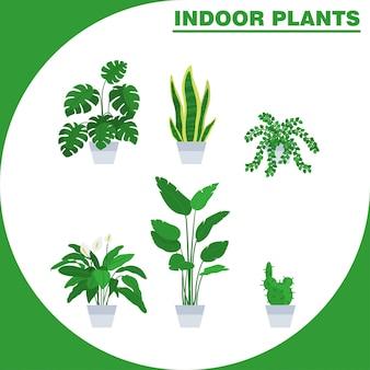 Conjunto de ilustración vectorial planta de interior