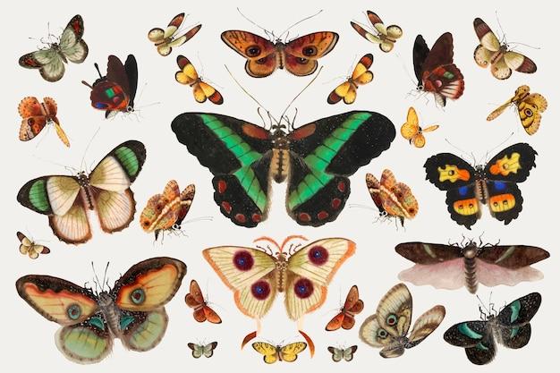 Conjunto de ilustración vintage de vector de insecto mariposa y polilla