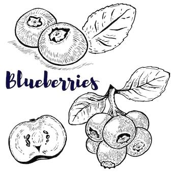 Conjunto de ilustraciones de arándanos sobre fondo blanco. elementos para logotipo, etiqueta, emblema, signo, cartel, menú. ilustración