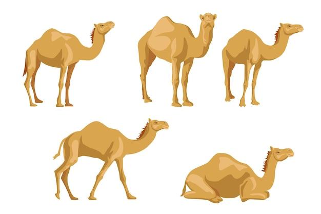 Conjunto de ilustraciones de camellos de lado.
