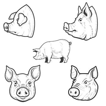Conjunto de ilustraciones de cerdo. cabeza de cerdo. elemento de emblema, letrero, cartel, insignia. ilustración