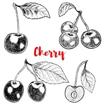 Conjunto de ilustraciones de cerezo dibujado a mano sobre fondo blanco. elementos para logotipo, etiqueta, emblema, signo, cartel, menú. ilustración