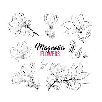 Conjunto de ilustraciones dibujadas a mano de flores de magnolia