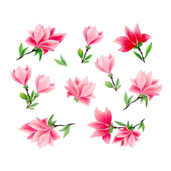 Conjunto de ilustraciones dibujadas a mano de magnolia