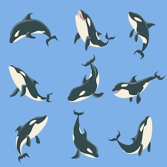 Conjunto de ilustraciones de diferentes posiciones del cuerpo de la ballena orca ártica.