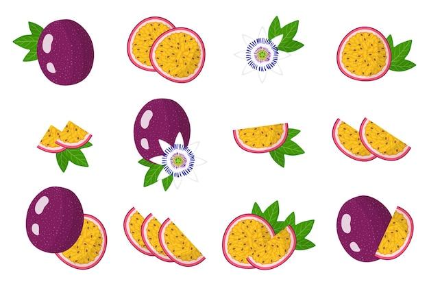 Conjunto de ilustraciones con frutas exóticas de maracuyá, flores y hojas aisladas
