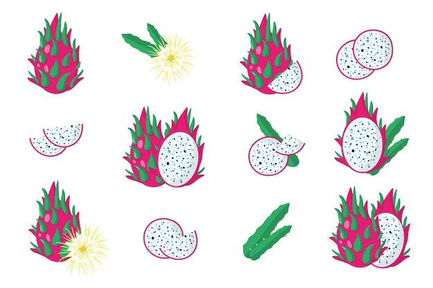 Conjunto de ilustraciones con frutas exóticas de pitaya, flores y hojas aisladas