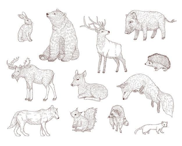 Conjunto de ilustraciones grabadas de diferentes animales del bosque.
