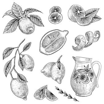 Conjunto de ilustraciones grabadas de limón o lima