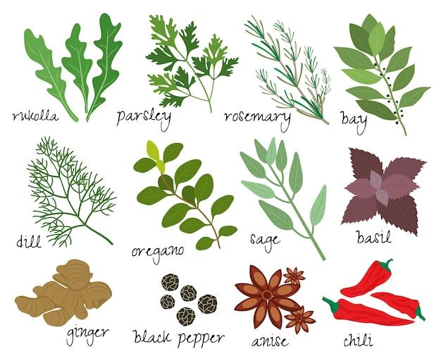 Conjunto de ilustraciones de hierbas y especias.